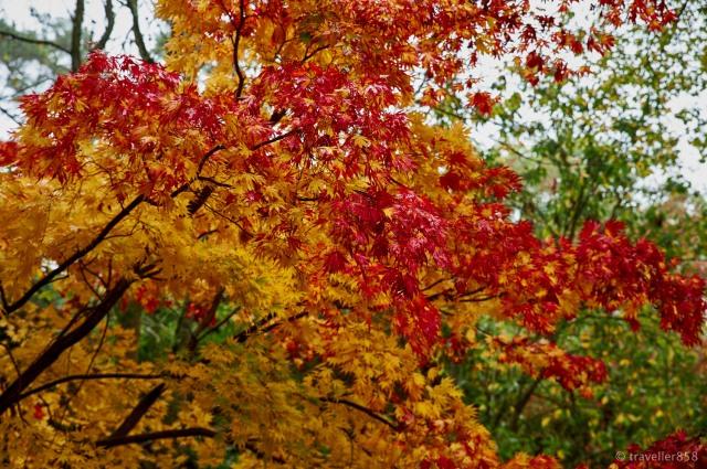 Winkworth Arboretum 6